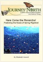 Journey North's Monarch Butterfly  Booklets and Slideshows for Kids