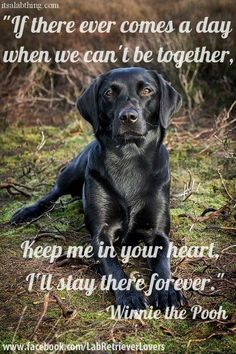 Dogs are family! I love all of them!!!!!