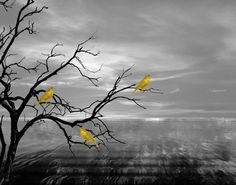 Yellow Gray Wall Art/Birds On Tree Branch/Decorative Bedroom/Bathroom Matted Picture