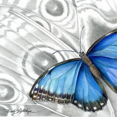 "Draw the Beauty of Nature with Mindy Lighthipe: Wildlife Art Insect, Nature, Butterfly ""BLUE MORPH...Wildlife Art Insect, Nature, Butterfly ""BLUE MORPHO BUTTERFLY"" The Art of Nature, Fine Art by Mindy Lighthipe"