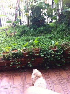Paisagismo garden home