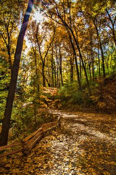 Nichols Arboretum Path, Ann Arbor, Michigan - photo by @hecktictravels