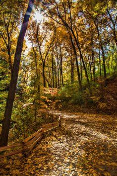 Nichols Arboretum Path, Ann Arbor, Michigan - photo by @hecktictravels