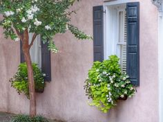 Charleston Window Box - carolinalifeinbloom.com