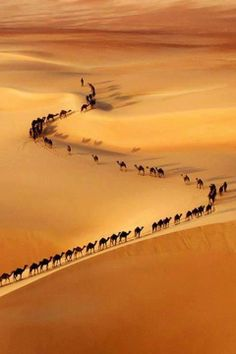 Places You Need See In Your Life A train of camels on the border of Saudi Arabia and UAE. Cool Pictures, Cool Photos, Beautiful Pictures, Silly Photos, Amazing Photos, Pictures Images, Beautiful World, Beautiful Places, Amazing Places