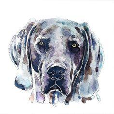 #edswatercolours #etsy #pinterest #watercolor #flickr #watercolours #dog #weimaraner #weimaranersofinstagram