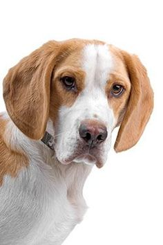 Dehydrated dog food: Dog owners will now be wiser regarding what to look for while picking any of those for their precious pets. http://dogsiteworld.com/how-to-pick-the-best-dehydrated-dog-food-products/ Fast track your knowledge to make the right decisions based on his needs. Protect your dog and make the right decisions. Dehydrated Dog Food