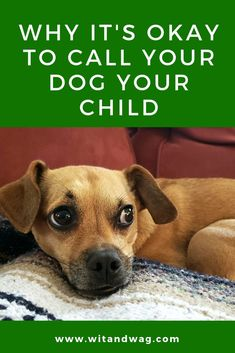 Why It's Okay to Call Your Dog Your Child via Dog Training Harness, Puppy Training Tips, Dog Harness, Training Your Dog, Dog Care Tips, Pet Care, Pet Tips, Dog Health Tips, Pet Health
