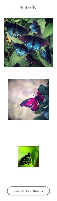"""""""Butterfly!"""" by sarahguo ❤ liked on Polyvore featuring backgrounds, butterflies, dragonflies, green, animals, fondos, home, home decor, wall art and photo picture"""