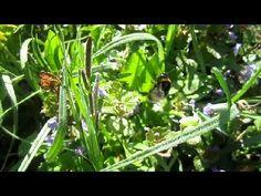 Весна. Здесь Прячется Шмель (Bumblebee. Nature. Sounds)