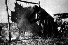 This is a picture of a Native American woman tanning a buffalo hide to be used for many things like clothing, shoes, blankets, and as part of their shelters. The Native American tribes did not let any part of the buffalo be wasted they also used the bones for tools.