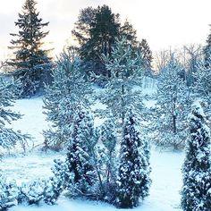 Hyvää viikonloppua ❄️ Have a nice weekend! Vihdoinkin lunta. Finally snow. #viikonloppu #weekend #maisema #ikkunasta #landscape #from #window #valkoinen #lumi #white #snow #valoisaa #bright #tuulaslife #nelkytplusblogit #bloggaaja #åblogit #lauantai Land Scape, Twitter, Photos, Outdoor, Instagram, Outdoors, Pictures, Outdoor Games, The Great Outdoors