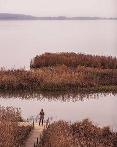 50 shades of brown. And I love it! ... Naturum Lake Tåkern Östergötland Sweden. @visitostergotland #autumn #sweden #visitsweden #swedishmoments #ig_sweden @moment #MakeYourWorldBigger