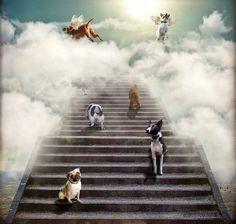 También los perros van al cielo.