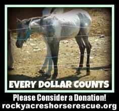 @Rocky Acres Horse Rescue & Sanctuary twitter