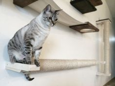 """We use these long Horizontal Sisal Poles to bridge gaps for our cats between other pieces on our walls. Our cats like to stretch on them after naps.  Our Horizontal Sisal Poles are mounted between two wood planks. They're built to fit studs with 16"""" between them:  3 stud - 32"""" Pole 4 stud - 48"""" Pole 5 stud - 64"""" Pole  If your studs are spaced differently than that please message us before placing an order and we can make any accommodations needed  Please leave which bracket color you would…"""