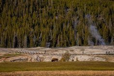 Eating Alone   @YellowstoneNPS  Photographed in May at Yellowstone National Park en route to film my #BMX documentary @genbmx (follow for a visual diary) in Montana.  #travelphotography #Canon5DMk2 #travel #trees #yellowstone  #nationalparks #parks #nature #instagood #instadaily #globaldaily #colorful #beautiful by emonhassan