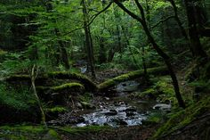 Camino de Pagozelai, julio de 2014.