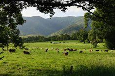 Bellingen NSW Promised Land (3 of 3) by ozipital, via Flickr