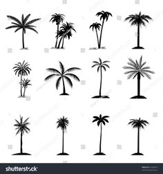 Palm tree collection flat icon. Isolated on white, vector