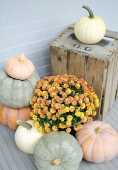 chalk painted pumpkins and orange flowers for a fall porch