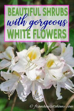 Of The Best White Flowering Shrubs – Gardening @ From House To Home - front yard landscaping ideas for full sun Full Sun Flowers, Full Sun Plants, White Flowers, Blooming Flowers, Full Sun Perennials, Shade Perennials, Shade Plants, Kew Gardens, White Gardens