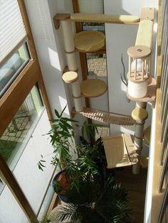 kratzbaum mehr maine coon cats pinterest. Black Bedroom Furniture Sets. Home Design Ideas