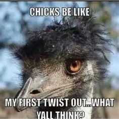 Team natural hair humor   LOL! Reminds me of my first twist out too !! lol funny.
