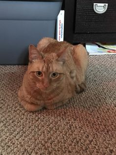 This loaf that has baked to perfection.