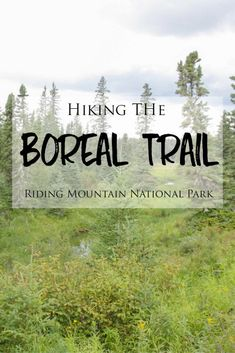 The Boreal Trail is a short hike in Manitoba's Riding Mountain National Park that passes through some of the most incredibly beautiful landscapes in the park. Kundalini Yoga, Alaska, Riding Mountain National Park, Hiking Photography, Canadian Travel, Seen, Lake George, Camping Hacks, Tent Camping