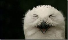 Owls can be happy to