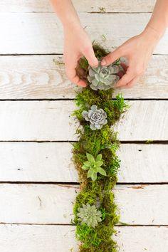 DIY Succulent Centerpiece Wedding & Event Plant Design