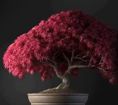 Where should you buy bonsai trees for sale? Our website! Bonsai trees add color…
