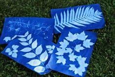 making sun print paper nature art with kids