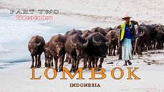 Lombok with VideoCobra Part Two