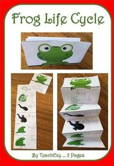 Life Cycle of Frog: Frogs and LOTS of FREEBIES!