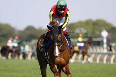 triple crown horse