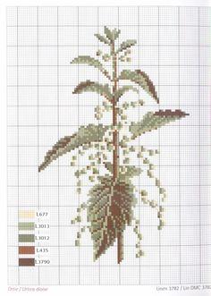 Gallery.ru / Фото #1 - Herbarium_DMC - 777m Cross Stitch Kitchen, Just Cross Stitch, Cross Stitch Needles, Cross Stitch Flowers, Cross Stitch Charts, Cross Stitch Designs, Cross Stitch Patterns, Cross Stitching, Cross Stitch Embroidery