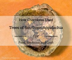 How Cherokees Used Trees of Southern Appalachia for Food, Medicine, and Craft – TheSurvivalSherpa.com