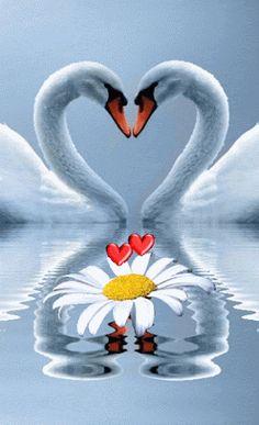 "keemeekaal: ""♡ Right On "" Beautiful Love Pictures, Beautiful Gif, Beautiful Birds, Cute Wallpaper Backgrounds, Love Wallpaper, Cute Wallpapers, Love Heart Images, Good Night Gif, Beautiful Rose Flowers"