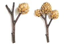 pistachio shell crafts | To make a pot, prepare dry twigs. Cut sticks of equal length. Roll the ...
