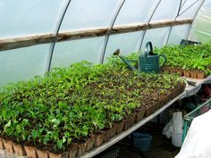 Greenhouse Growing Guide - What to grow and when in your greenhouse...  http://www.greenhousestores.co.uk/Greenhouse-Growing-Guide.html