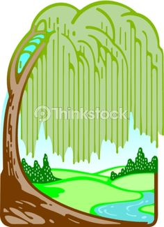 Vector Art: Weeping willow tree Color Illustrator Ver. 5 Beautiful...