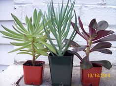 Succulant Plant Collection Nice Gift #Growingin212inchpots