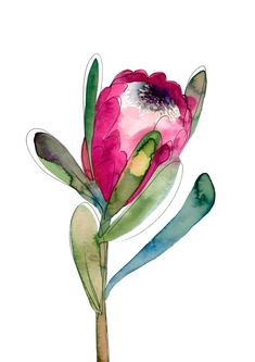 Flower Drawing 'Protea' by Natalie Martin Protea Art, Flor Protea, Plant Drawing, Painting & Drawing, Wall Drawing, Art Floral, Watercolor Flowers, Watercolor Paintings, Drawing Flowers