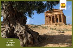 ¿Conoce el mito del origen del olivo? En el blog de Jolca podrás conocer por qué los griegos consideran a éste como un árbol divino. http://bit.ly/1pEQvUu