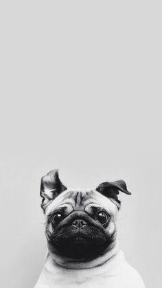 Funny-Puppy-Dog-Simple-Macro-iPhone-6-wallpaper-ilikewallpaper_com_750.jpg 750×1.334 pixels