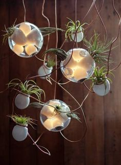 hanging office plants | ... Lights with Glass Plant Terrariums from Bocci, Modern Home Decor