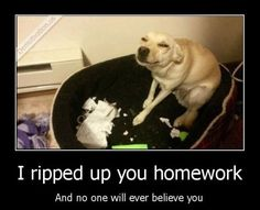 They'll Never Believe You // funny pictures - funny photos - funny images - funny pics - funny quotes - Funny, Jokes, Humor Funny Animal Quotes, Cute Funny Animals, Funny Animal Pictures, Funny Cute, Funny Photos, Funny Shit, The Funny, Funny Dogs, Funny Stuff