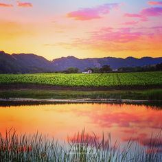 I love driving through the beautiful California Wine Valley during the late evening in hopes to capture a beautiful sunset reflection. This is a representation of how I viewed that gorgeous evening light and the Napa Valley this year.  Title: Napa Valley Sunset Reflection.  #mastershots #lifeadventure #insta_america #earthmagazine #beautifuldestinations #infinity_shotz #allnatureshots #bestnatureshots #ig_serenity #ig_masterpiece #mastershots #natgeo #natgeocreativeig #outdoorwomen…